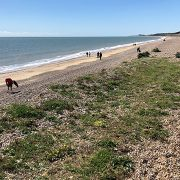 Spectra staff organise beach clean